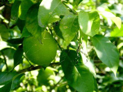 10月のレモン畑